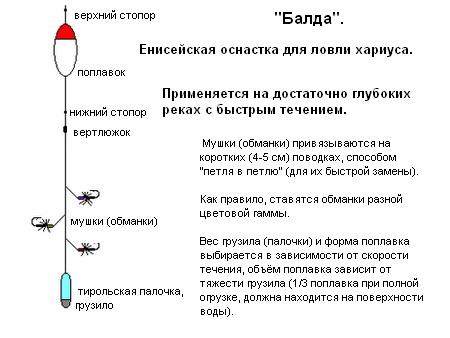 москвичи поняли, как собрать снасть балда для ловли рыбы мировых шеф-поваров Сирии